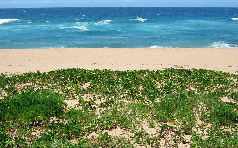 Beaches are not just beaches; they are an entire domain of valuable biodiversity