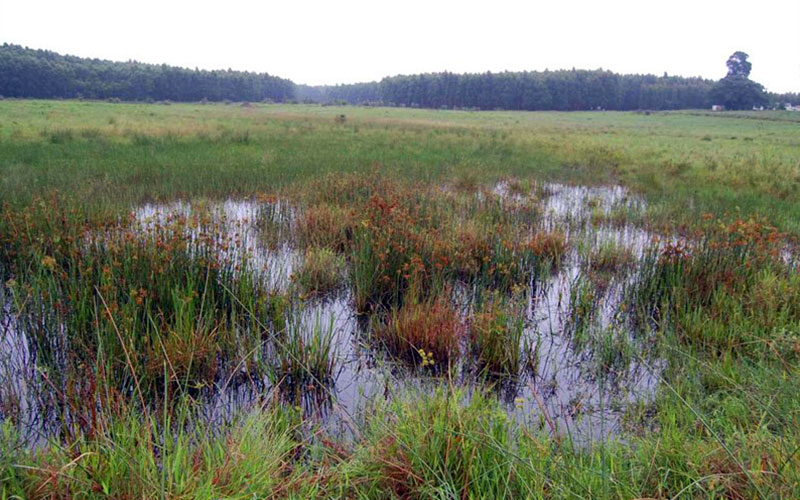 Wetlands are essential contributors to the balance of nature – much more than we realise