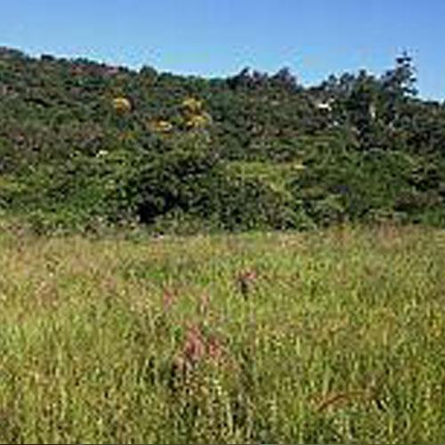 Msinsi Grassland Restoration
