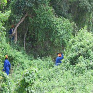 Umzimkhulu River Forest Restoration